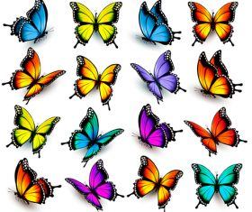 Colorful butterflies background vector
