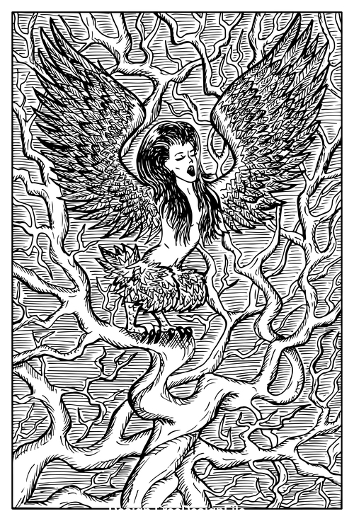 Harpy engraved fantasy illustration vector