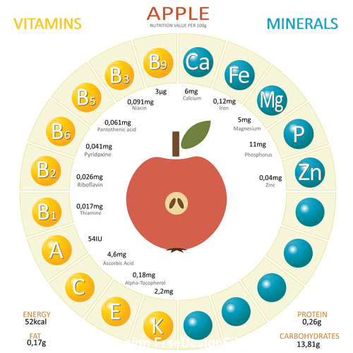 Infographics about nutrients in apple vector