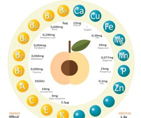 Infographics about nutrients in apricot vector