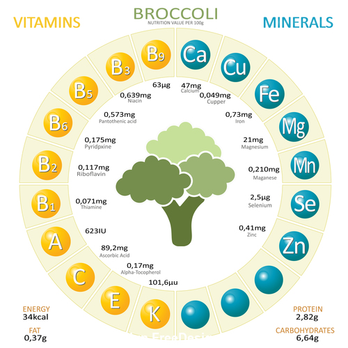 Infographics about nutrients in broccoli vector