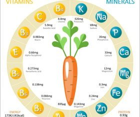 Infographics about nutrients in carrot vector