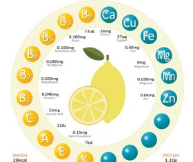 Infographics about nutrients in lemon vector