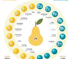 Infographics about nutrients in pear vector