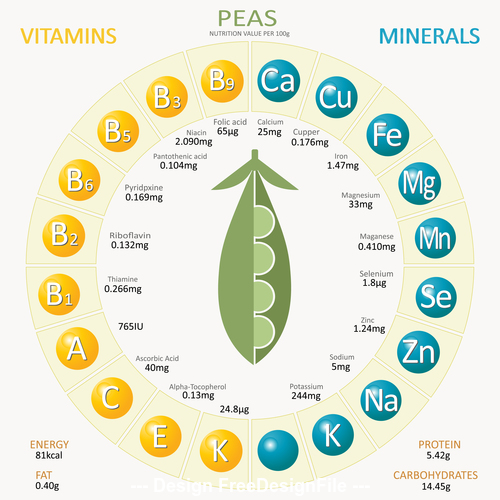 Infographics about nutrients in peas vector