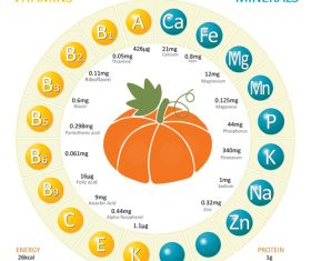 Infographics about nutrients in pumpkin vector