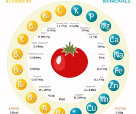 Infographics about nutrients in tomato vector