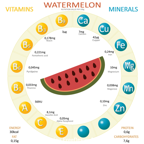 Infographics about nutrients in watermelon vector
