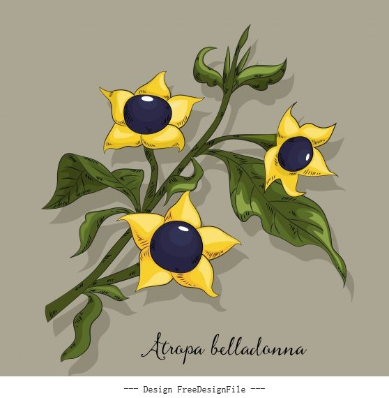 Belladonna flower icon colored classical handdrawn sketch vector