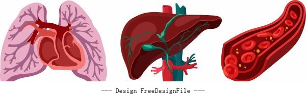 Internal organs icons lung liver blood vessels vector