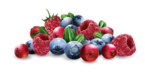 Berry 3d illustration vector
