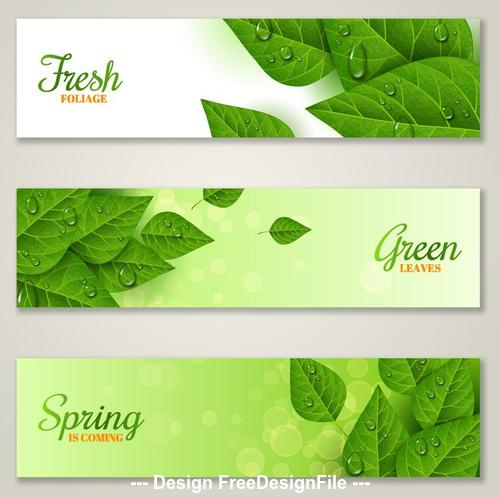 Green spring leaf banner with water drop vector