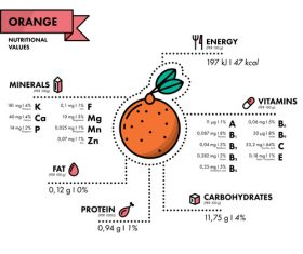 Orange nutritional Information vector