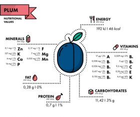 Plum nutritional Information vector