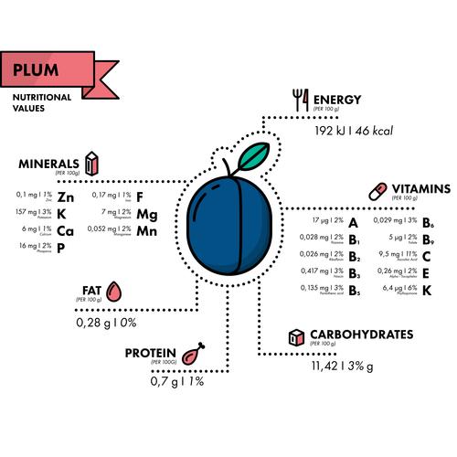 Plum nutritional Information vector