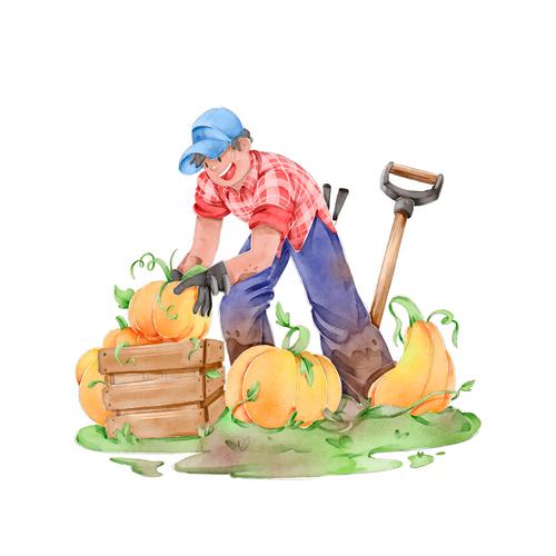 Pumpkin Harvest cartoon illustration vector