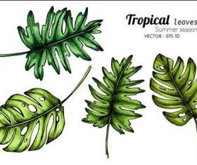 Banana leaf illustration vector