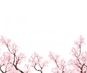 Cherry blossom vector on white background