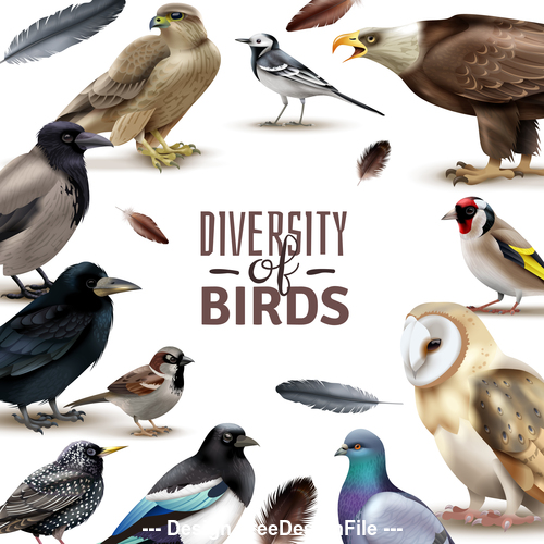 Different birds kinds realistic illustrations vector