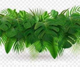 Emerald plant leaves vector illustrations