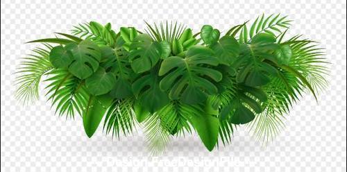 Emerald plant leaves vector illustrations