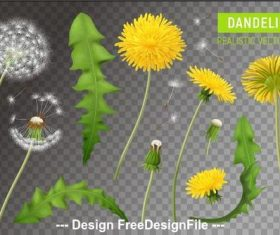 Flower leaf dandelions vector illustrations