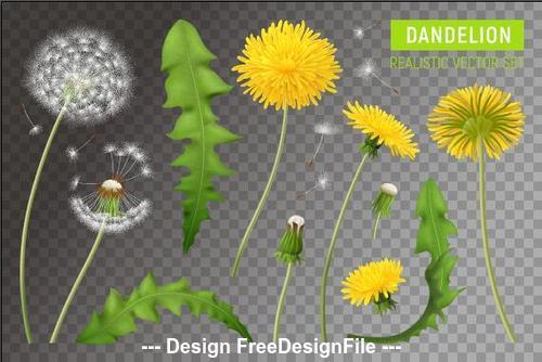 Flower leaf dandelions vector illustrations