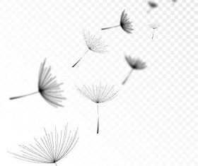 Flying dandelions vector illustrations