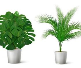 Green plants vector illustrations