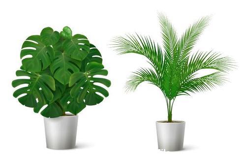 Green plants vector illustrations