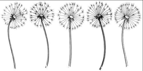 Hand painted dandelions vector illustrations