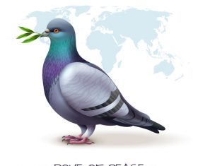 Pigeon realistic illustrations vector