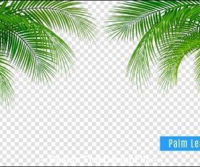 Plant leaves vector illustrations