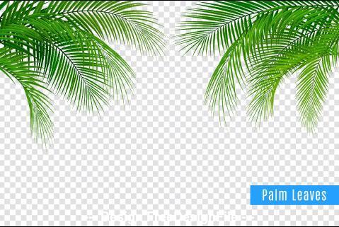 Plant leaves vector illustrations