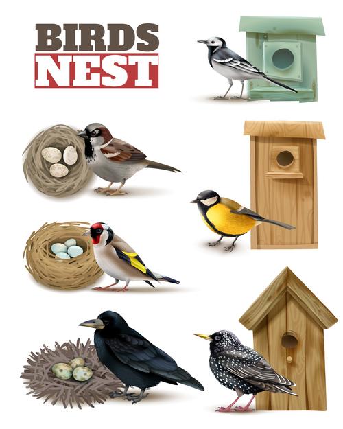 Protection birds vector