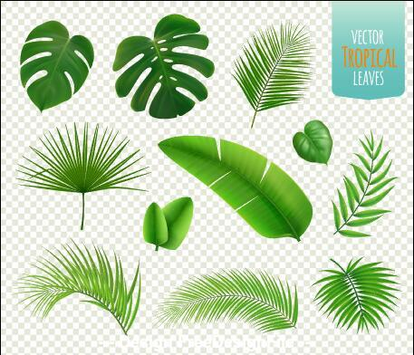 Vector illustrations tropical leaves