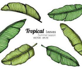 Green leaves illustration vector