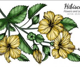 Hibiscus flower and leaves illustration vector
