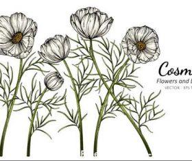 Illustration white flower and leaves vector