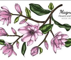 Magnolia flower and leaves illustration vector