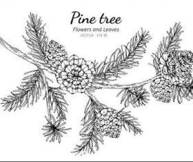 Pine tzee illustration vector