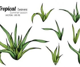 Tropical leaves illustration vector