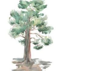 Watercolor painting pine tree vector