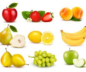 Group of different fruit Vector