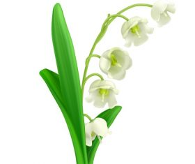 Lily of the Valley Flower Vector