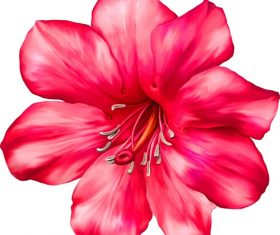 Red Lily Flower Vector