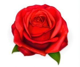 Red Rose Flower Vector