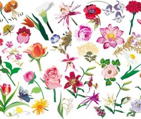 Various Flowers Vector Image Set Vector