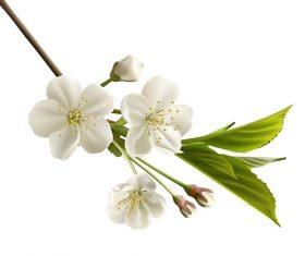 White Gladiolus Flower Vector