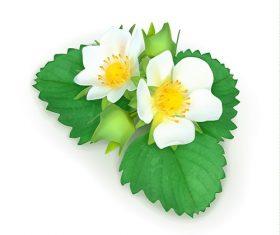 White Japanese Anemone Flower Vector
